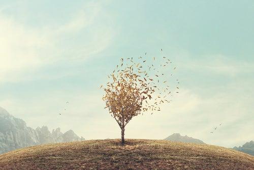 Un arbre au milieu du champ