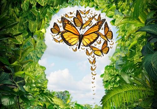 L'esprit avec des papillons symbolisant l'écpathie